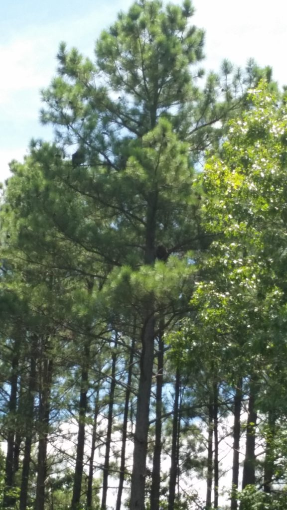 They're difficult to see but you can spot 2 black blurs in the tree.